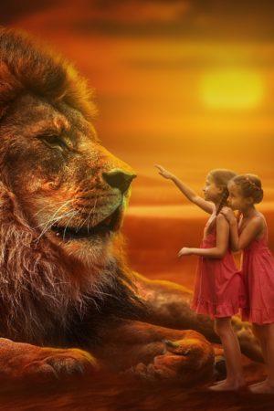 lion-3099986_1920